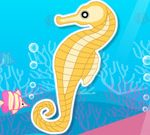 Finding Seahorses